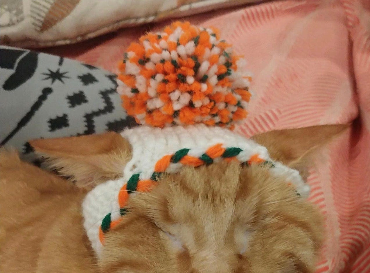 """Jennie Gresham knits """"Cat Hats"""" for friends, family and by request, asking only that recipients donate to the Maclean Animal Adoption Center in return.  Owners take photos and send their cats' """"comment"""" on the hat.  Mad-Eye Moodie doesn't have much to say."""