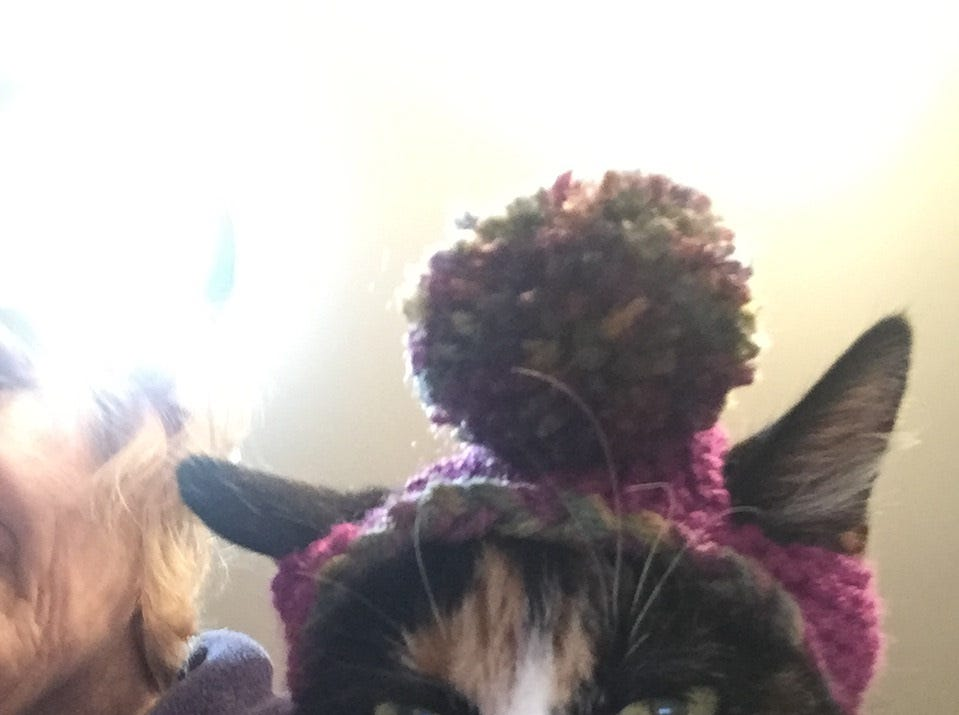 """Jennie Gresham knits """"Cat Hats"""" for friends, family and by request, asking only that recipients donate to the Maclean Animal Adoption Center in return.  Owners take photos and send their cats' """"comment"""" on the hat.  Lizzie says """"Really, someone thinks this is a good idea?"""""""