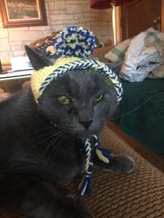 "Jennie Gresham knits ""Cat Hats"" for friends, family and by request, asking only that recipients donate to the Maclean Animal Adoption Center in return.  Owners take photos and send their cats' ""comment"" on the hat.  Shy says, ""I'll do anything to sit on a lap!"""