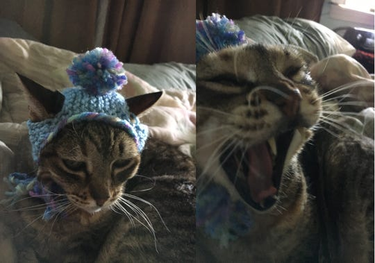 """Jennie Gresham knits """"Cat Hats"""" for friends, family and by request, asking only that recipients donate to the Maclean Animal Adoption Center in return.  Owners take photos and send their cats' """"comment"""" on the hat.  Molly the cat lets the look on her face do the talking."""
