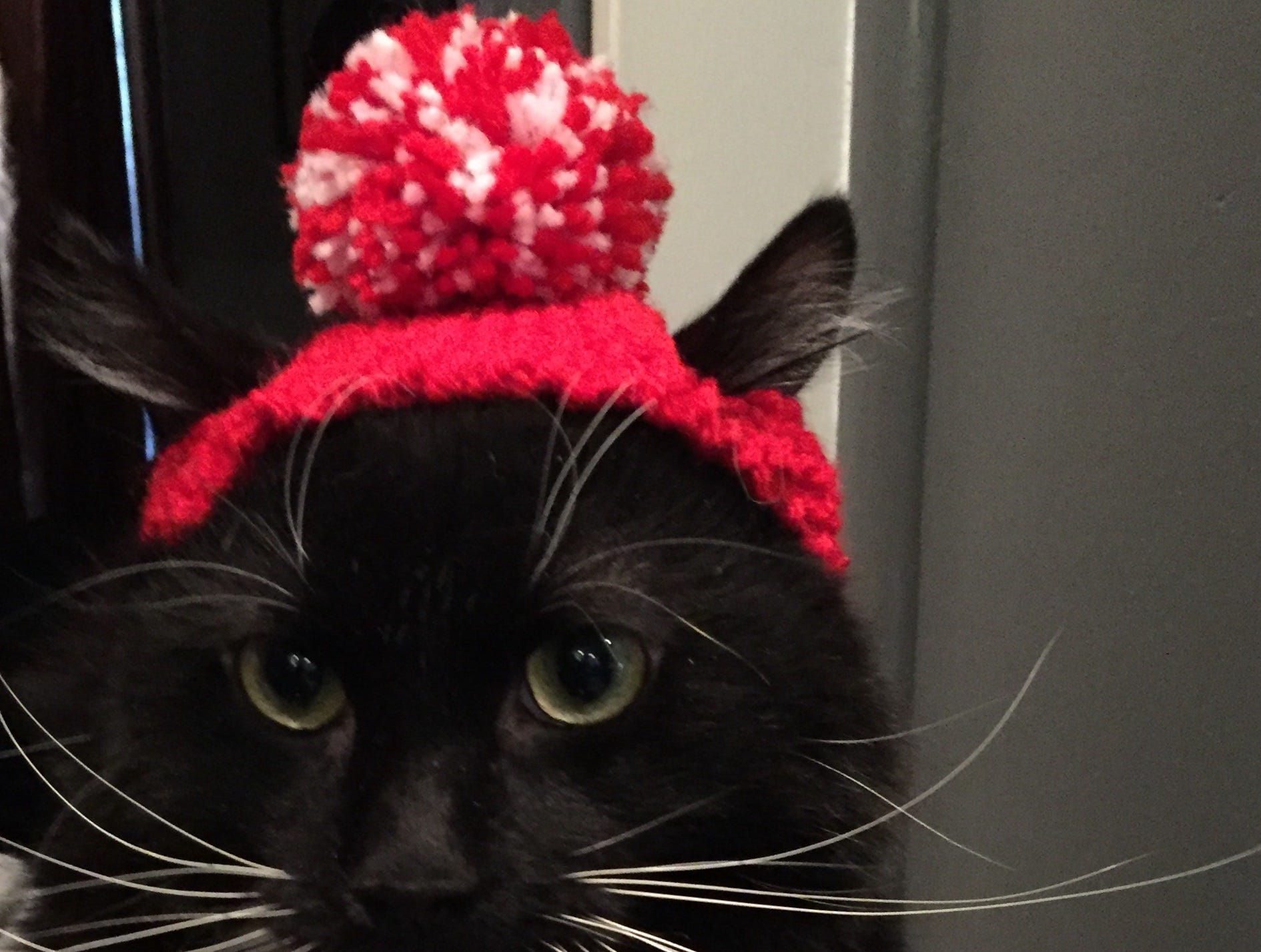 """Jennie Gresham knits """"Cat Hats"""" for friends, family and by request, asking only that recipients donate to the Maclean Animal Adoption Center in return.  Owners take photos and send their cats' """"comment"""" on the hat.  Filbert Finneous Figaro says, """"What has she put on me now?!"""""""