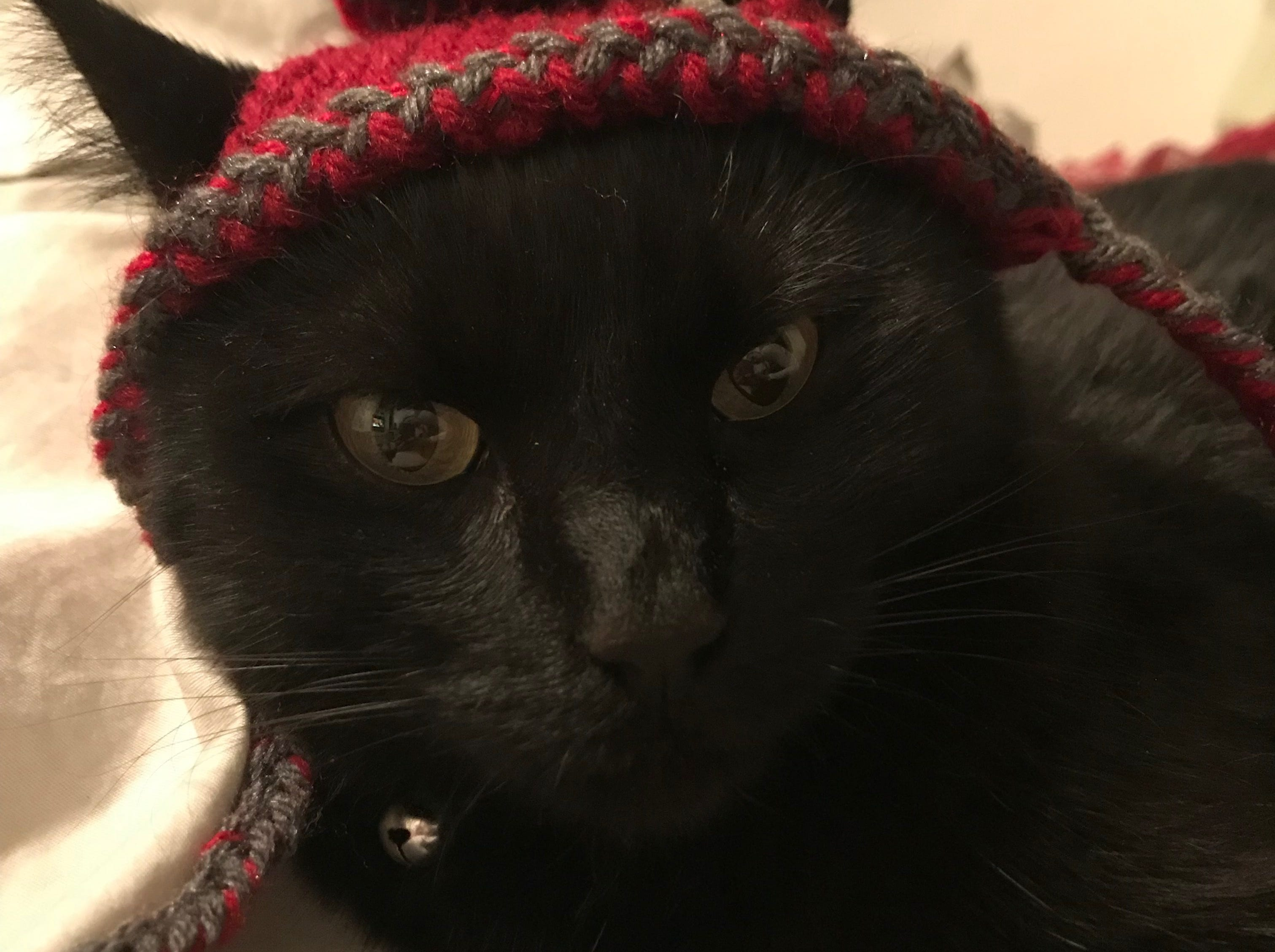 """Jennie Gresham knits """"Cat Hats"""" for friends, family and by request, asking only that recipients donate to the Maclean Animal Adoption Center in return.  Owners take photos and send their cats' """"comment"""" on the hat.  Kopa the cat doesn't have much to say."""