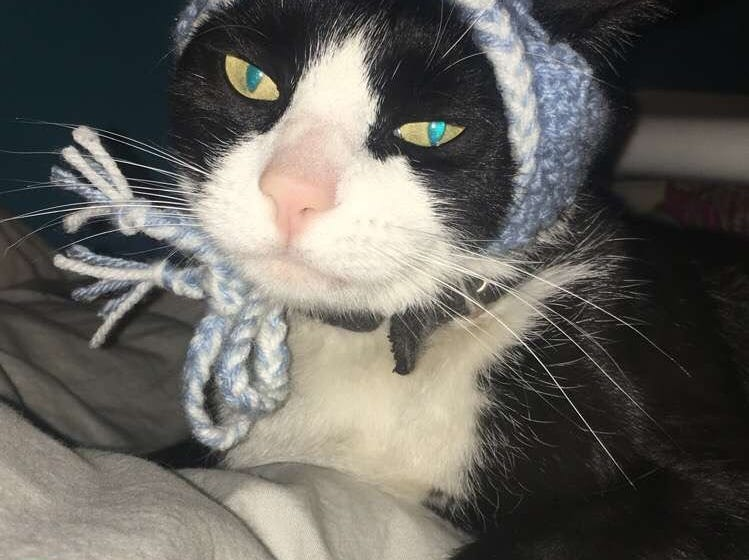 """Jennie Gresham knits """"Cat Hats"""" for friends, family and by request, asking only that recipients donate to the Maclean Animal Adoption Center in return.  Owners take photos and send their cats' """"comment"""" on the hat.  Mr. Mistoffelees doesn't have much to say."""