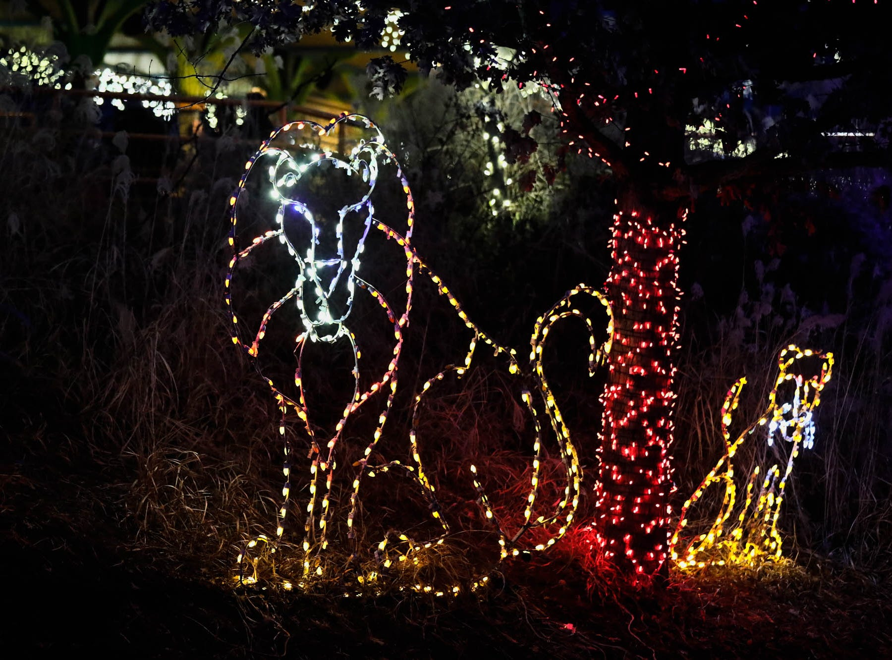 A lion and cheetah glow during Christmas at the Indianapolis Zoo on Wednesday, Dec. 19, 2018.