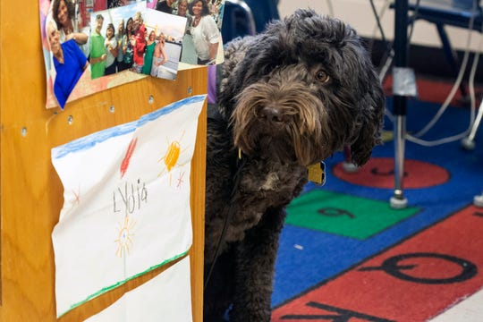 Ariel the labradoodle keeps a close watch over Hadley Jo Lange during classes at St. Patrick. Ariel has been trained to detect oncoming epileptic seizures that complicate Hadley Jo's life. Dec. 11, 2018