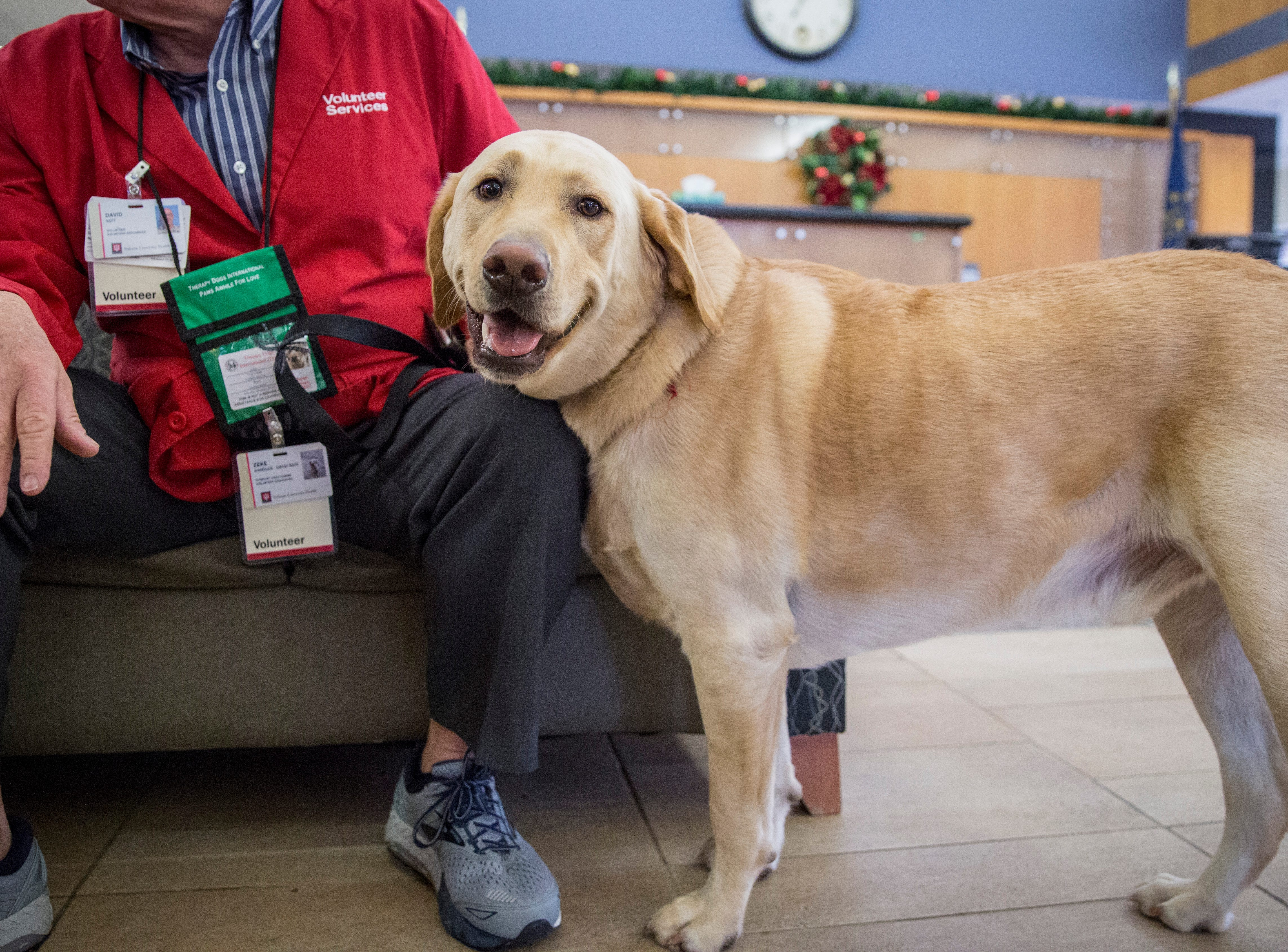 David Neff, followed by his trusty companion, Zeke, a hefty 3-year-old Labrador retriever walk through the halls of IU Health Ball Memorial Hospital to help cheer up staff. Zeke is certified as a therapy dog with Therapy Dogs International as part of the hospital's comfort canines program.