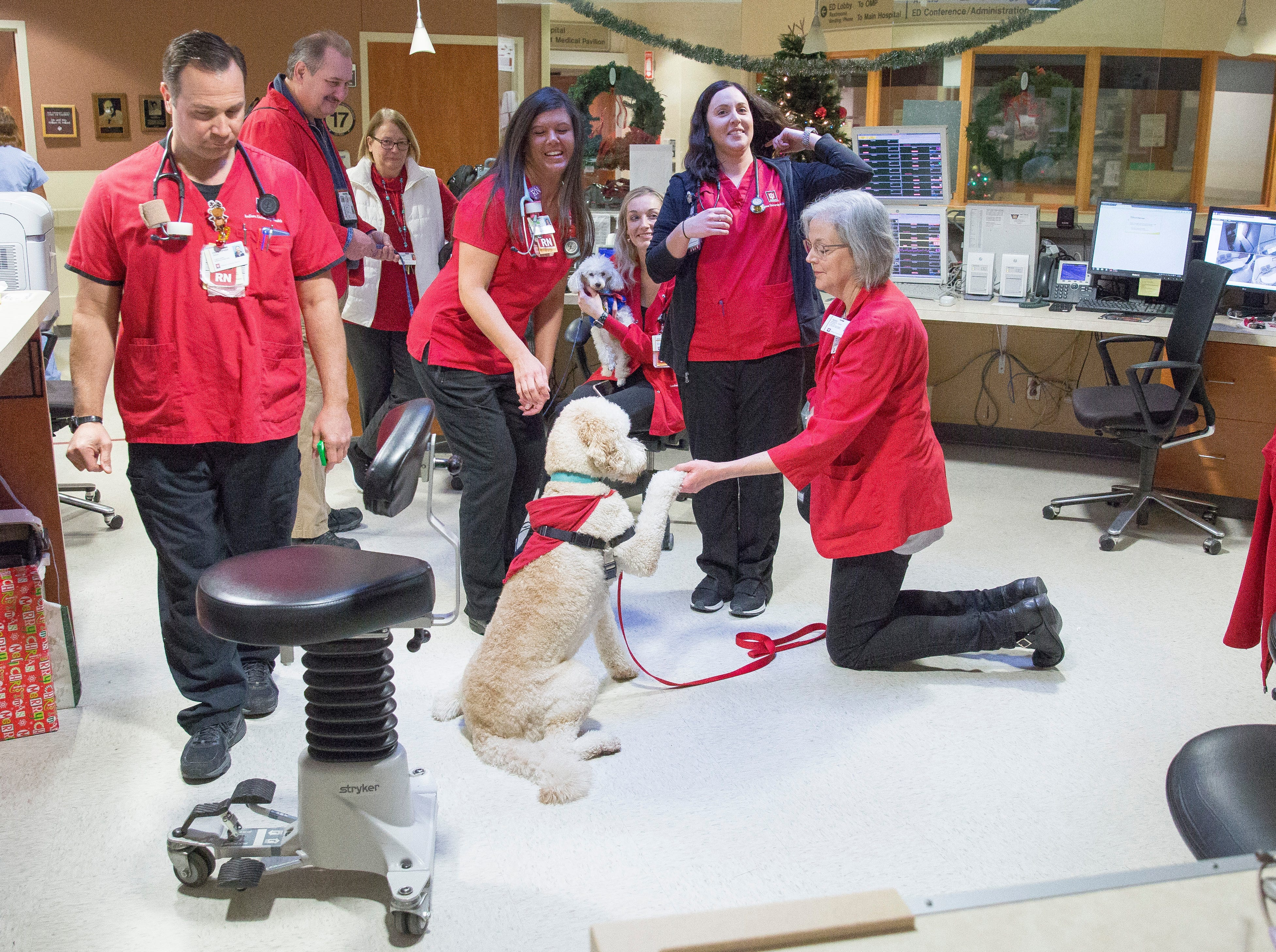 Four therapy dogs IU Health Ball Memorial Hospital's comfort canines program roam through the halls of BMH to cheer up staff.