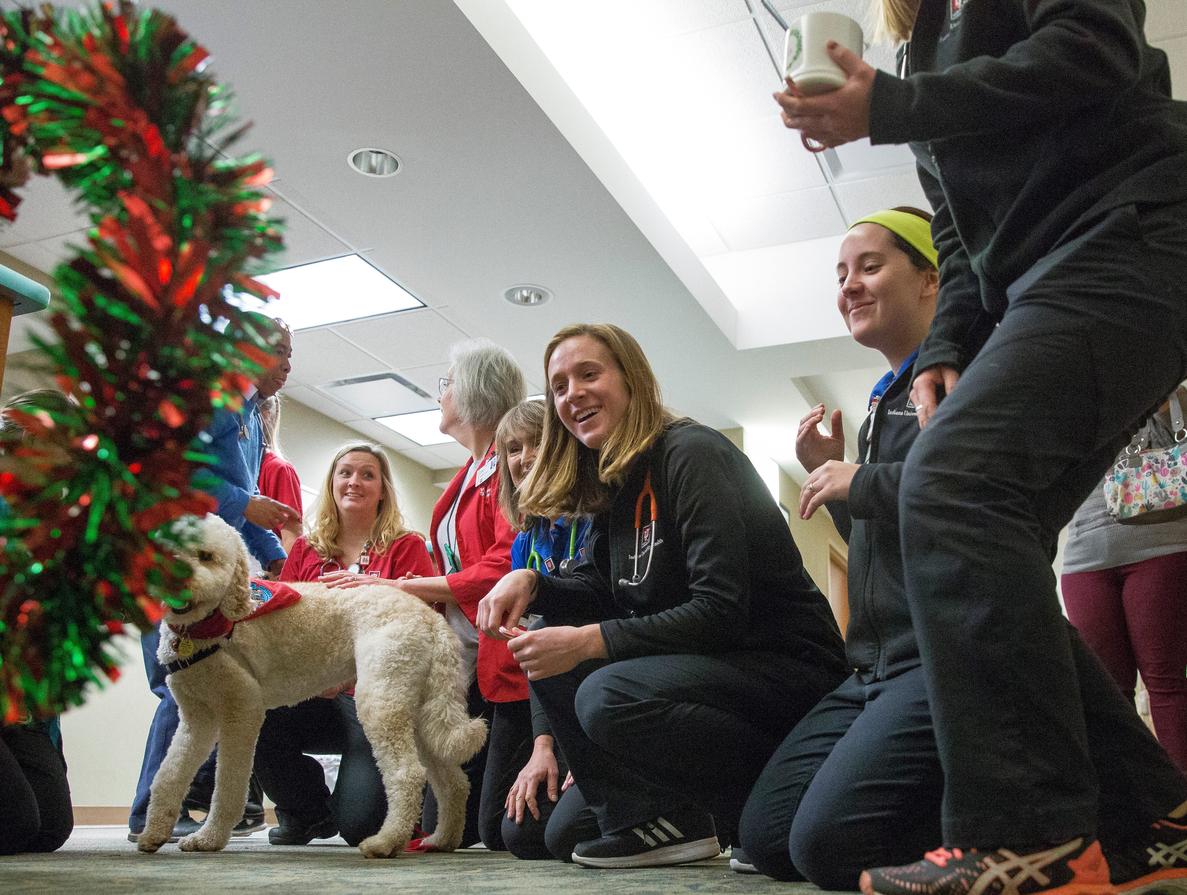 Teddy, a comfort canine with IU Health Ball Memorial Hospital, works with his owner Janet Roepke to cheer up patients.
