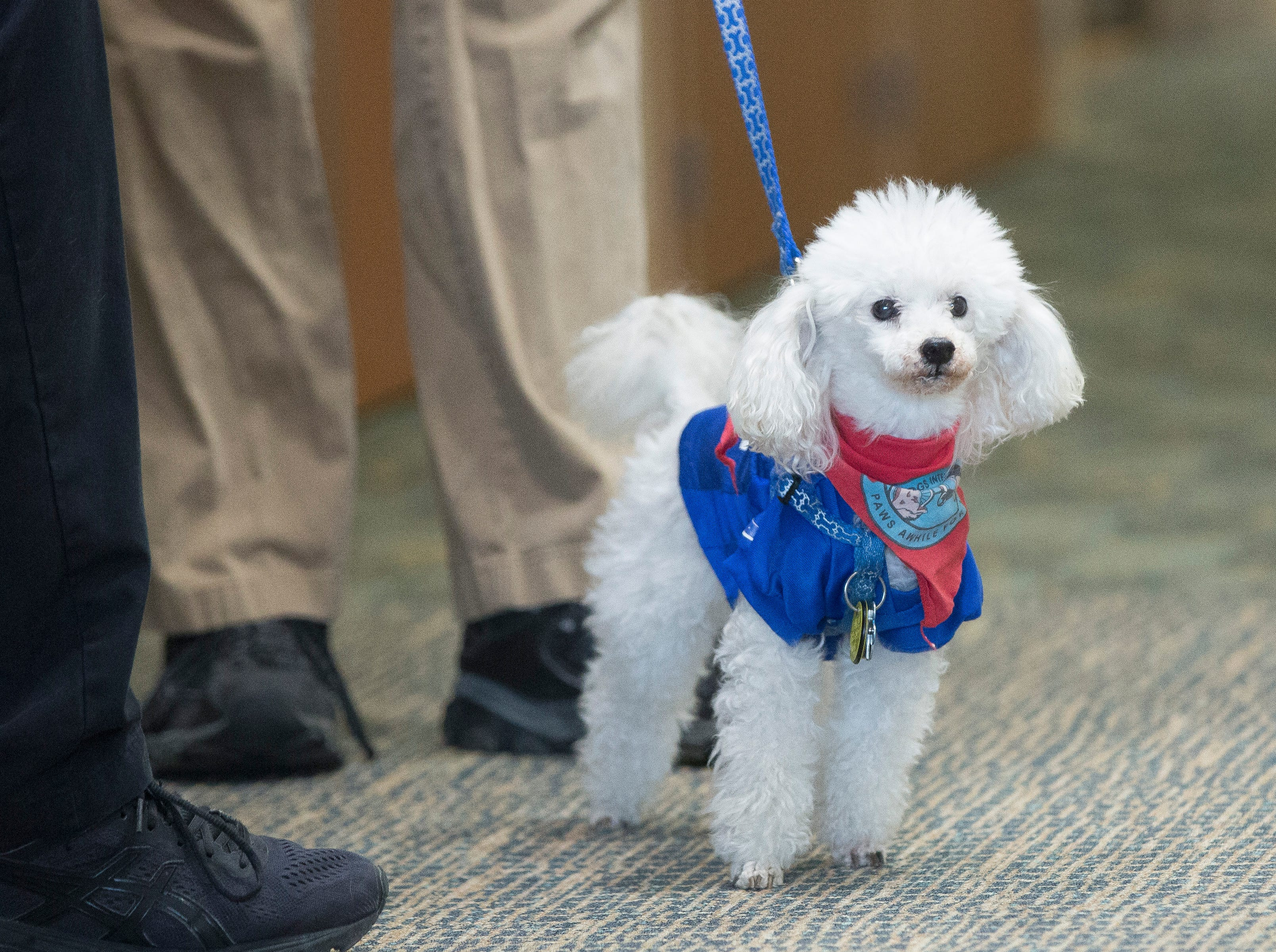 Fantasy, a comfort canine with IU Health Ball Memorial Hospital, works with his owner Scott Picha to cheer up patients.