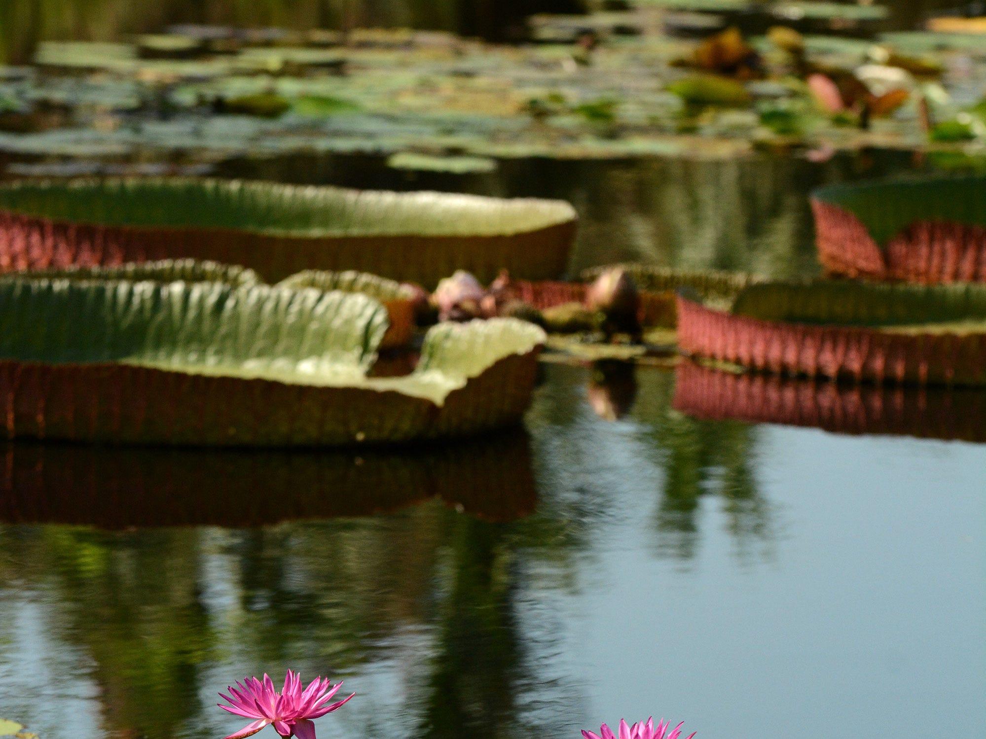 The Naples Botanical Garden contains many beautiful plant specimens.