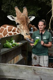 Naples Zoo giraffe wrangler Elizabeth Johnson speaks to children in schools, as Jumanji sticks out his tongue at the Naples Zoo.