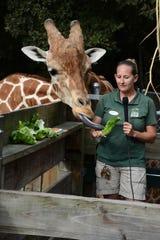 Naples Zoo giraffe wrangler Elizabeth Johnson speaks to children in schools, as Jumanji sticks out his tongue at the Naples Zoo.