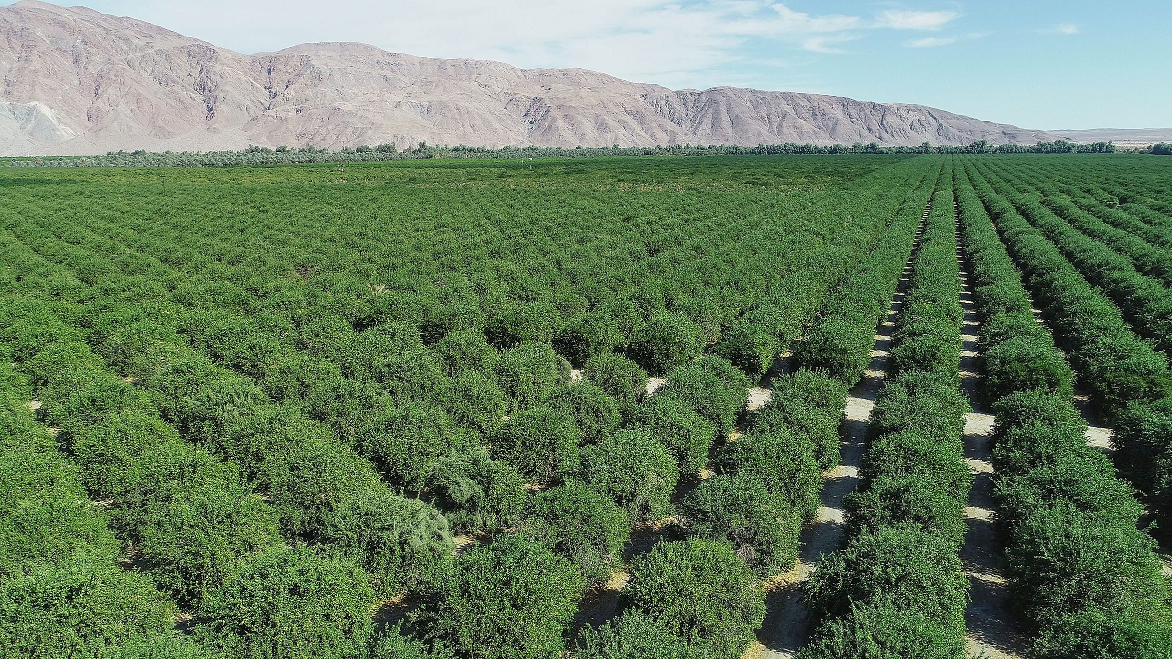 Seley Ranches produces grapefruits, lemons and tangerines in the desert near Borrego Springs. The orchard relies on groundwater pumped from the aquifer.