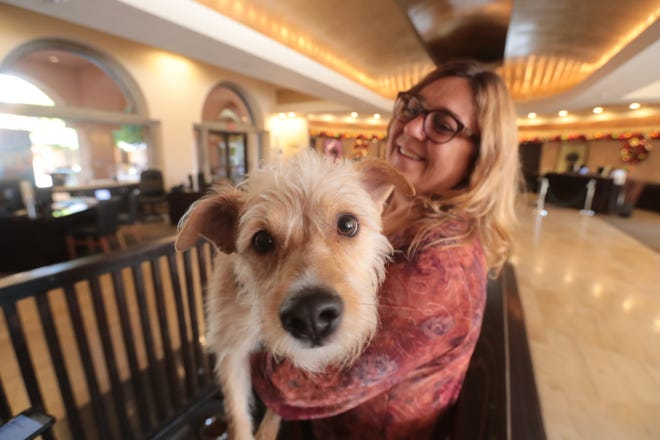 Madison in the arms of Laura Hunt Little, the marketing director at the Westin Mission Hills in Rancho Mirage on Thursday, December, 20, 2018. The hotel has partnered with local animal shelter,  Animal Samaritan, to show adoptable dogs in the hotel lobby.