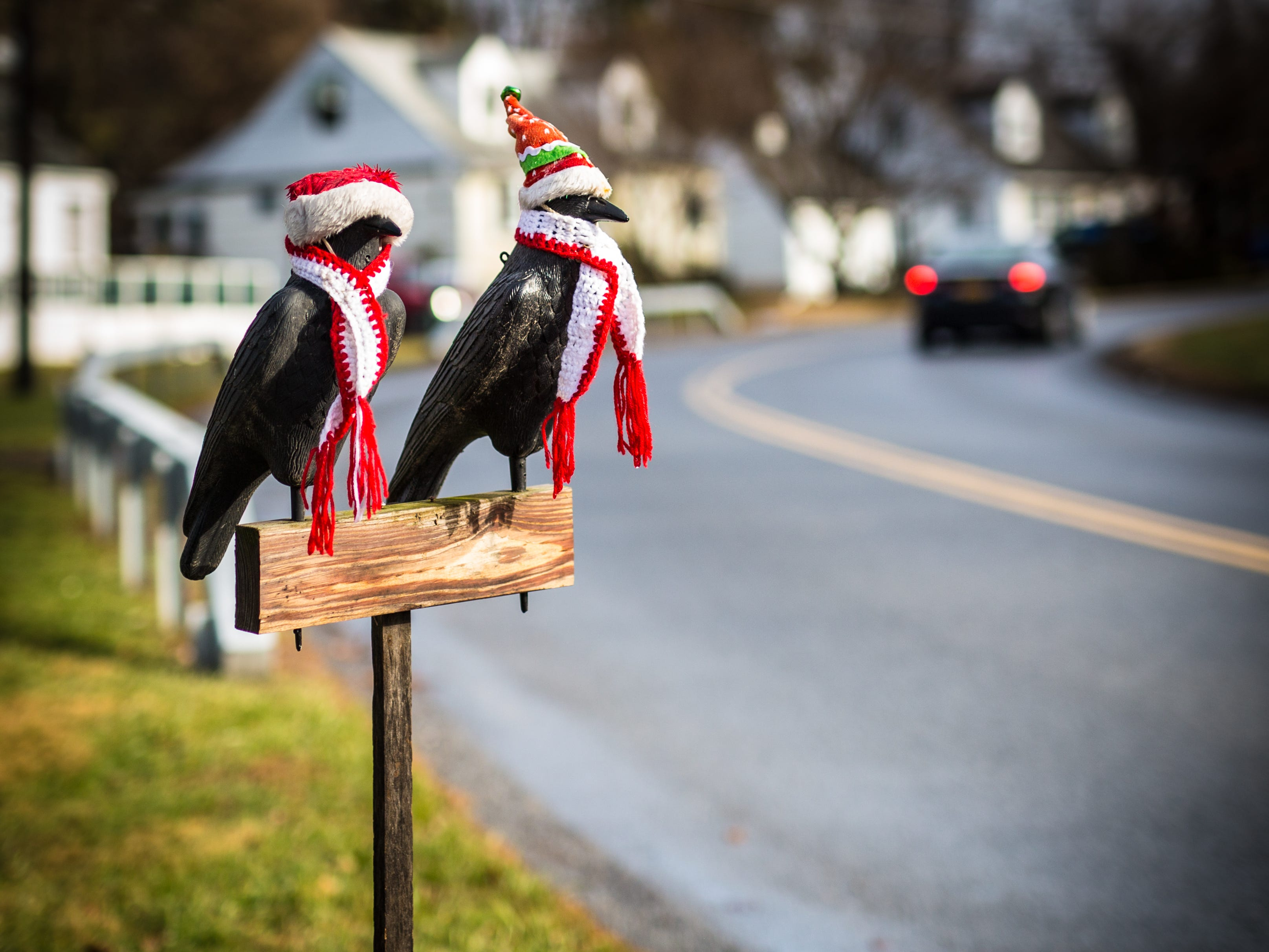 Love these two #guardian #crows that watch over the street #onmywaytpwork everyday. They went away for a while and are finally back and more #stylin than ever. #thankstowhoeverdoesthis