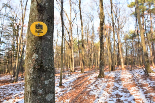 The Yellow Trail meanders through the woods at High Banks Preserve.