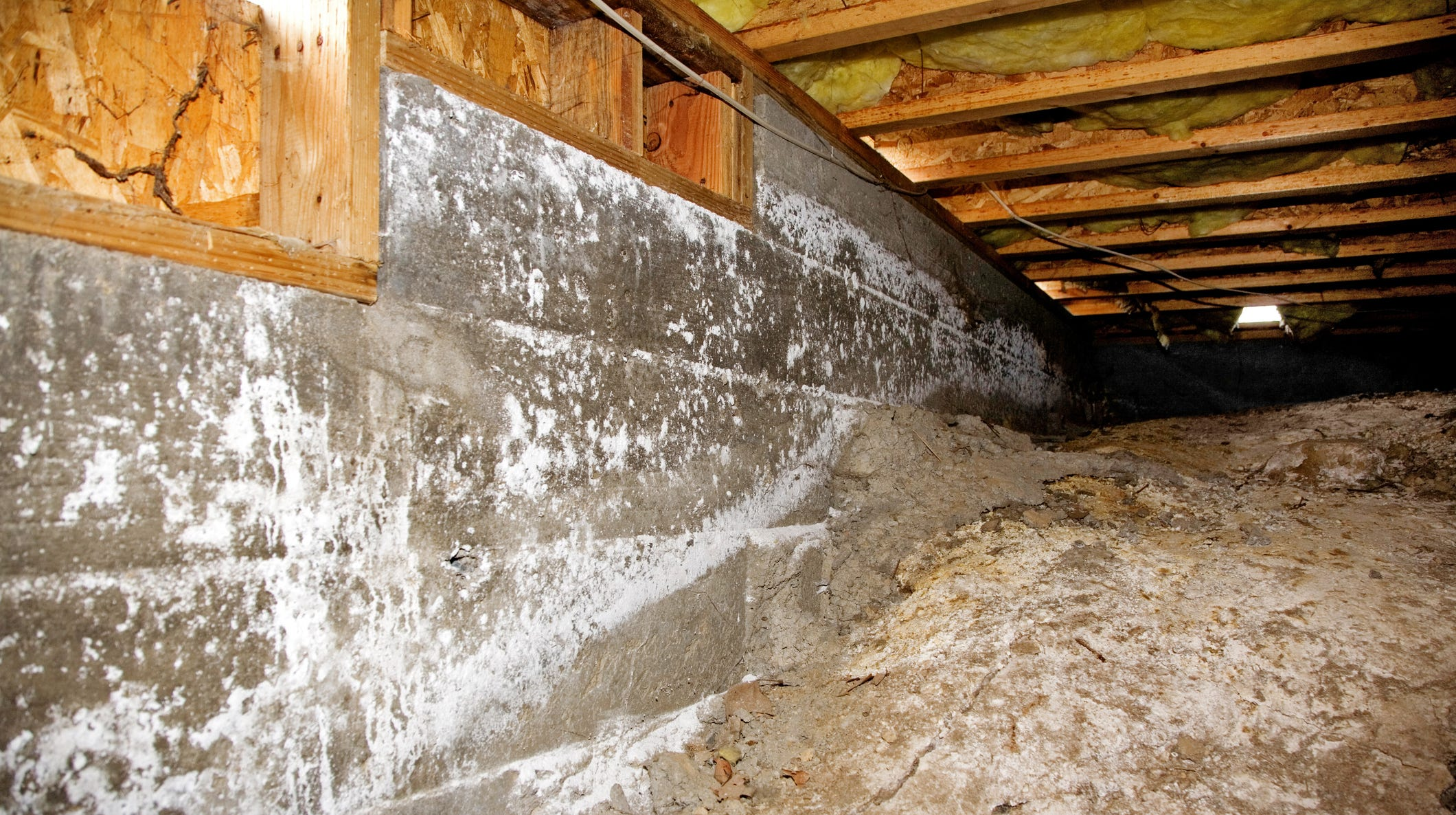 Without the pros, cleaning mold can be unsafe and even counterproductive if cross contamination occurs.