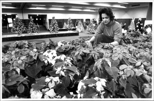 Isabel Schneider waters poinsettias at the Festival of Trees in 1988.