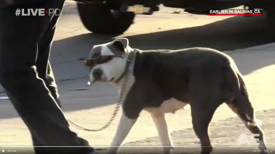 "A dog with sunglasses is just one part of what a Salinas police officer called the ""weirdest stop ever,"" which was caught on camera by LivePD."