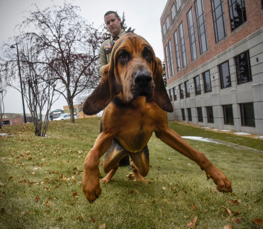 Stearns County K9 Storm is ready to work while posing for photos Wednesday, Dec. 19, in St. Cloud.