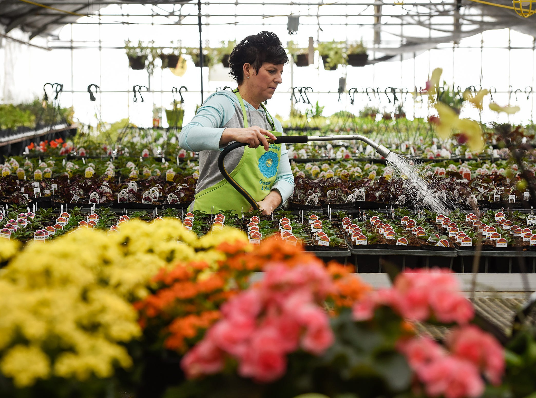 Owner Jackie Notch fertilizes and waters young plants Tuesday, March 6, at Southway Greenhouse & Florist. Production was in full swing right after Valentines Day potting plants and creating hanging baskets for spring. The staff will create about 1,000 assorted hanging baskets and 2,100 potted Geraniums for the season. The staff is quickly working to filling the six greenhouses by spring.