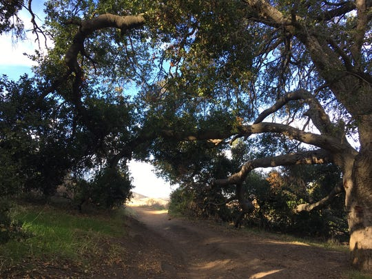 A tree shades a trail at Rancho Sierra Vista, part of the Santa Monica Mountains National Recreation Area.