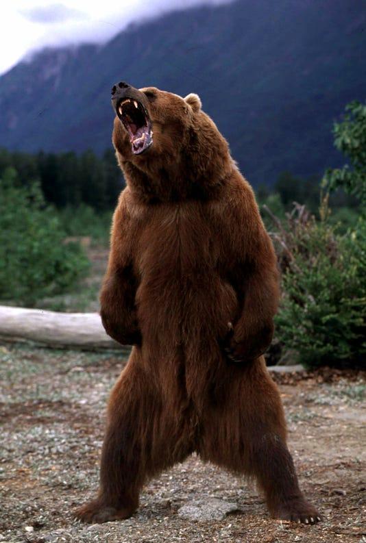 Ap B01 Bear Grrrrrr 13 A Ent Usa Ak