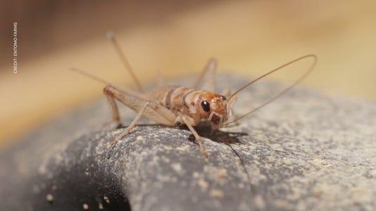 VIDEO THUMBNAIL - crickets