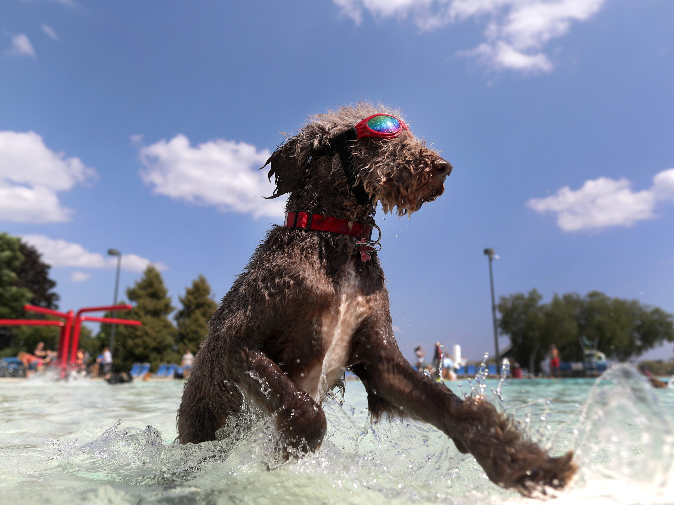 Drool in the Pool at Neenah City Pool on Thursday, August 23, 2018, in Neenah, Wis. Drool in the Pool is an annual event that invites dog owners to bring their pets for a canine only swim.