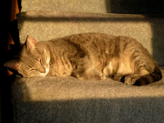 Cat Weirdo Cat On Stairs