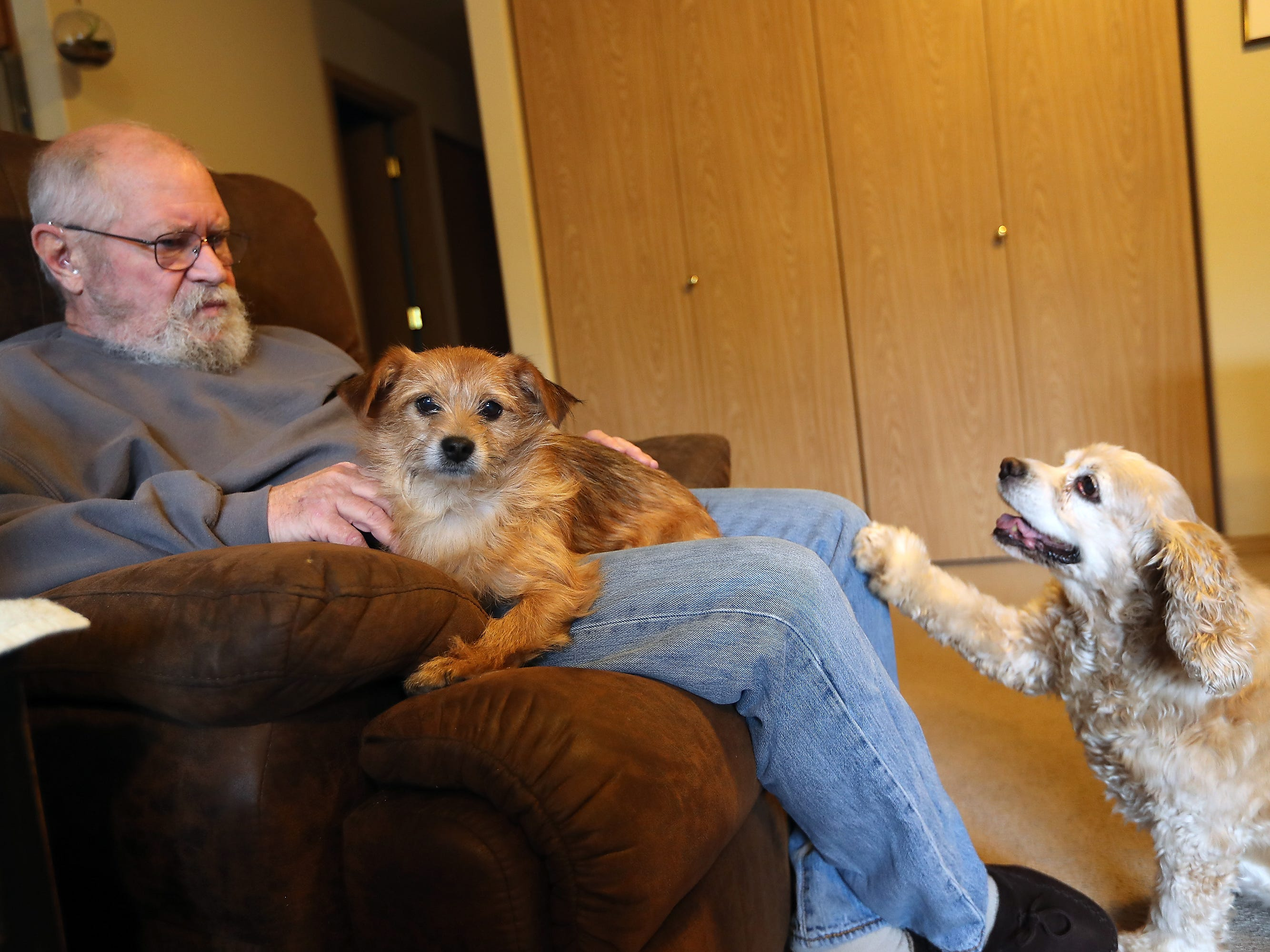 John O'Connor's dog Ladybug puts her paw on his leg to get his attention as Spanky sits in his lap at their Port Orchard home on Thursday, December 20, 2018.