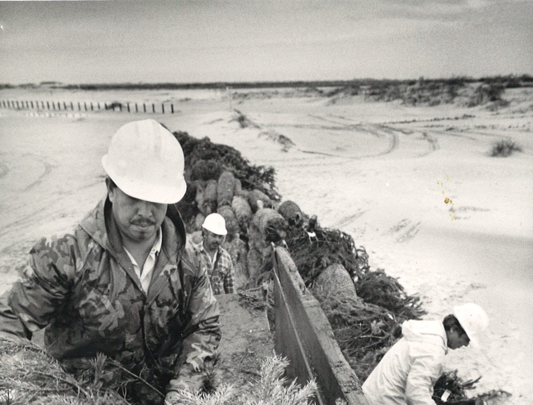 Servando Sosa (foreground) unloads Christmas trees with the help of other Nueces County Road Department workers on Dec. 30, 1986. The truckload of tree was part of about 2,000 trees unloaded on Padre Island to help restore the dunes.