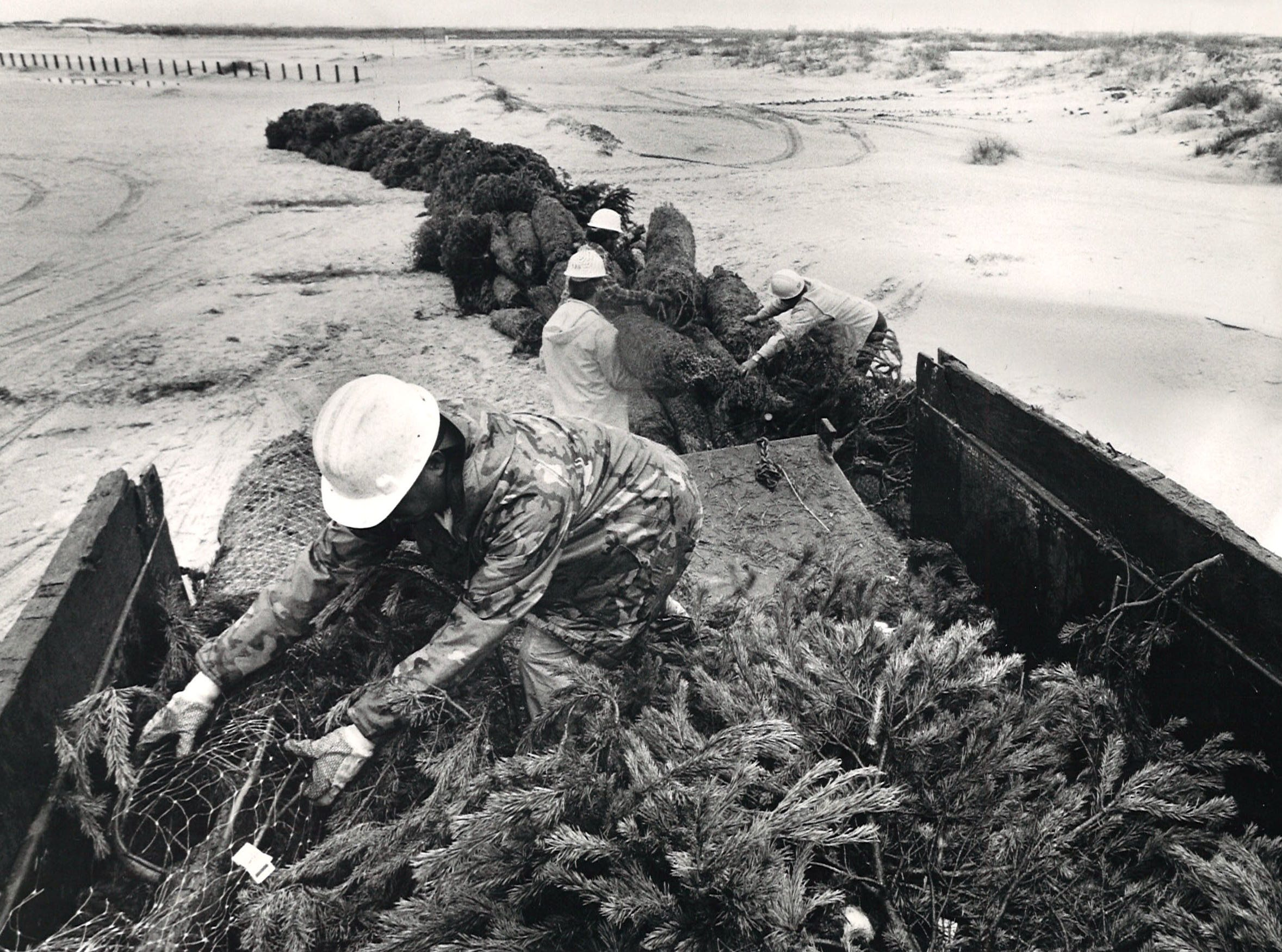 Servando Sosa (foreground), unloads Christmas trees with the help of other Nueces County Road Department workers on Dec. 30, 1986. About 2,000 trees were unloaded on the dunes at Padre Island.