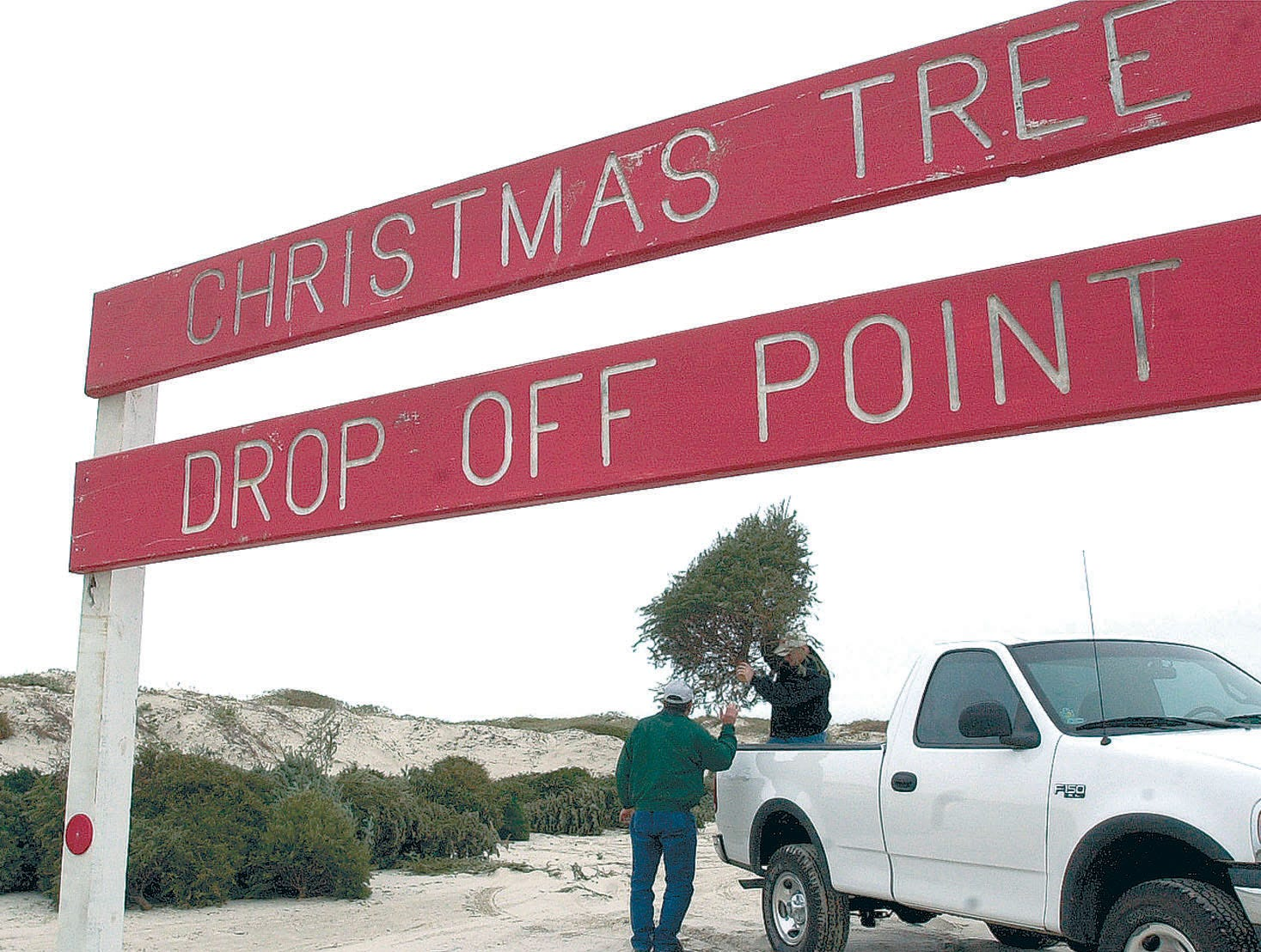 Christmas trees are discarded at one of the drop-off points on Zahn Road on Padre Island Jan. 2, 2001.