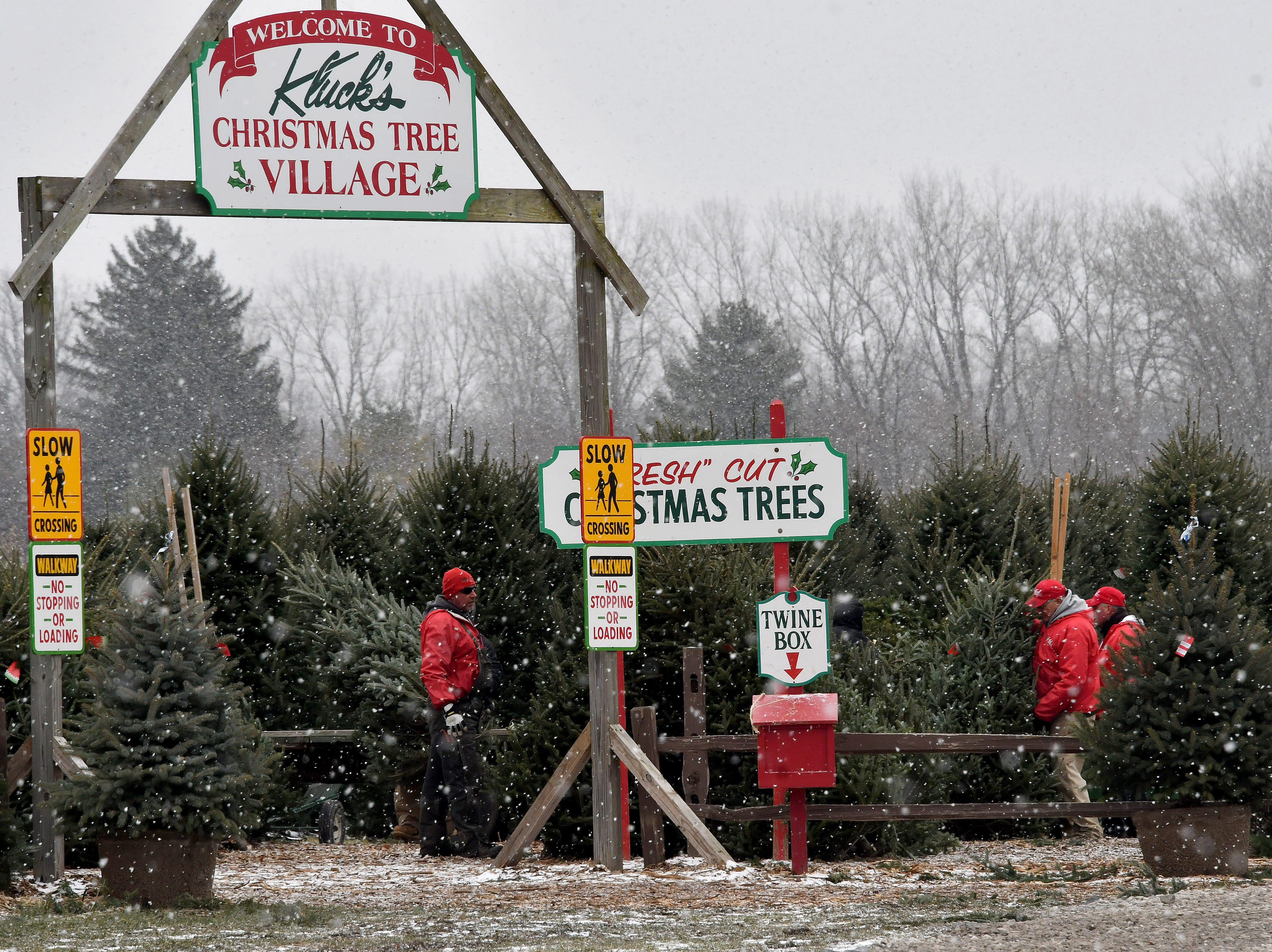 Workers stock a large selection of freshly cut trees for those who don't want to cut their own, and live, potted trees are available as well.  Kluck Nursery supplies tens of thousands of trees, shrubs and flowers to retailers all over the state.