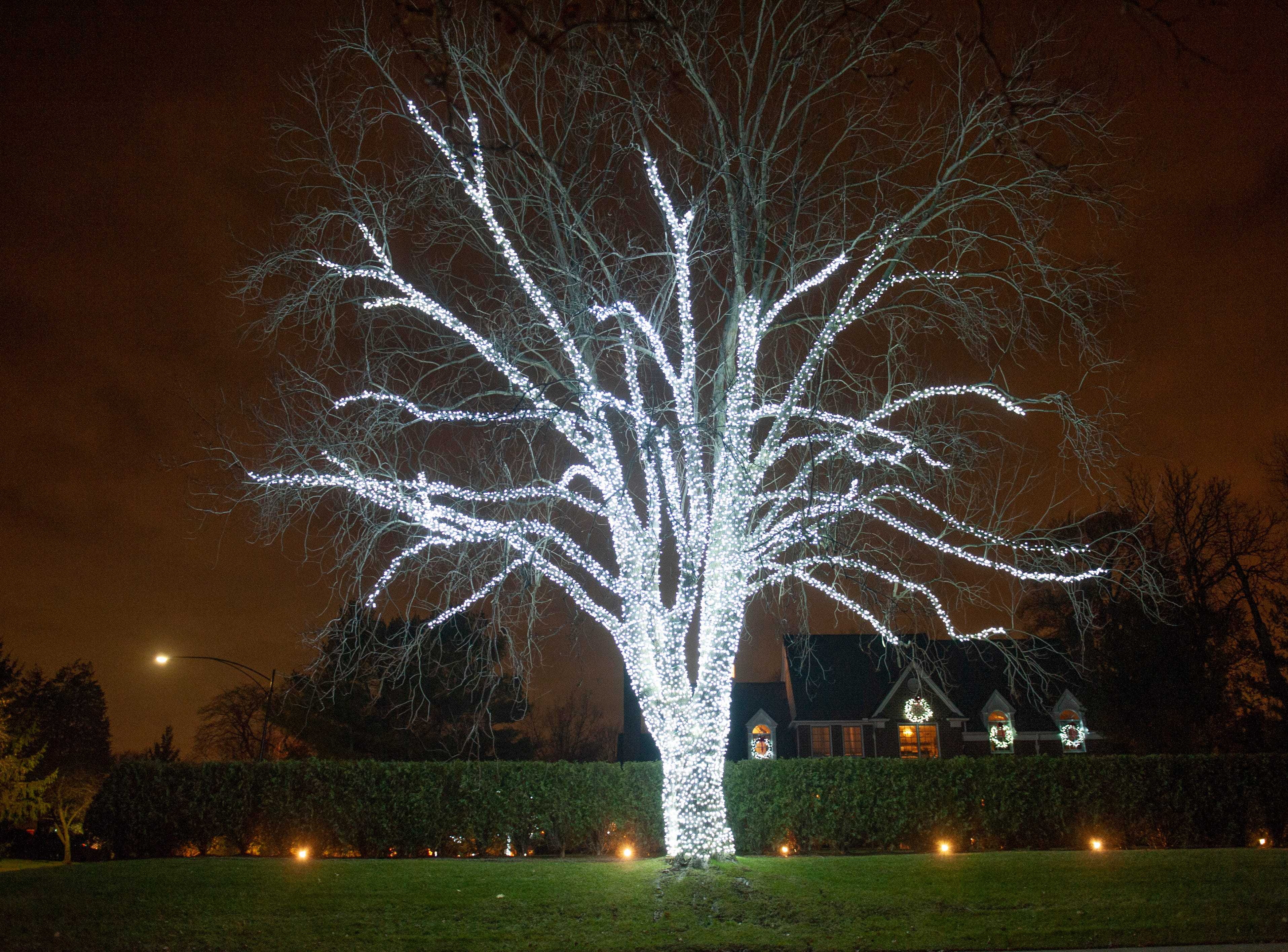 An enormous tree is illuminated in whie light in front of a home along Lake Shore Drive in Grosse Pointe on Tuesday, December 17, 2018.