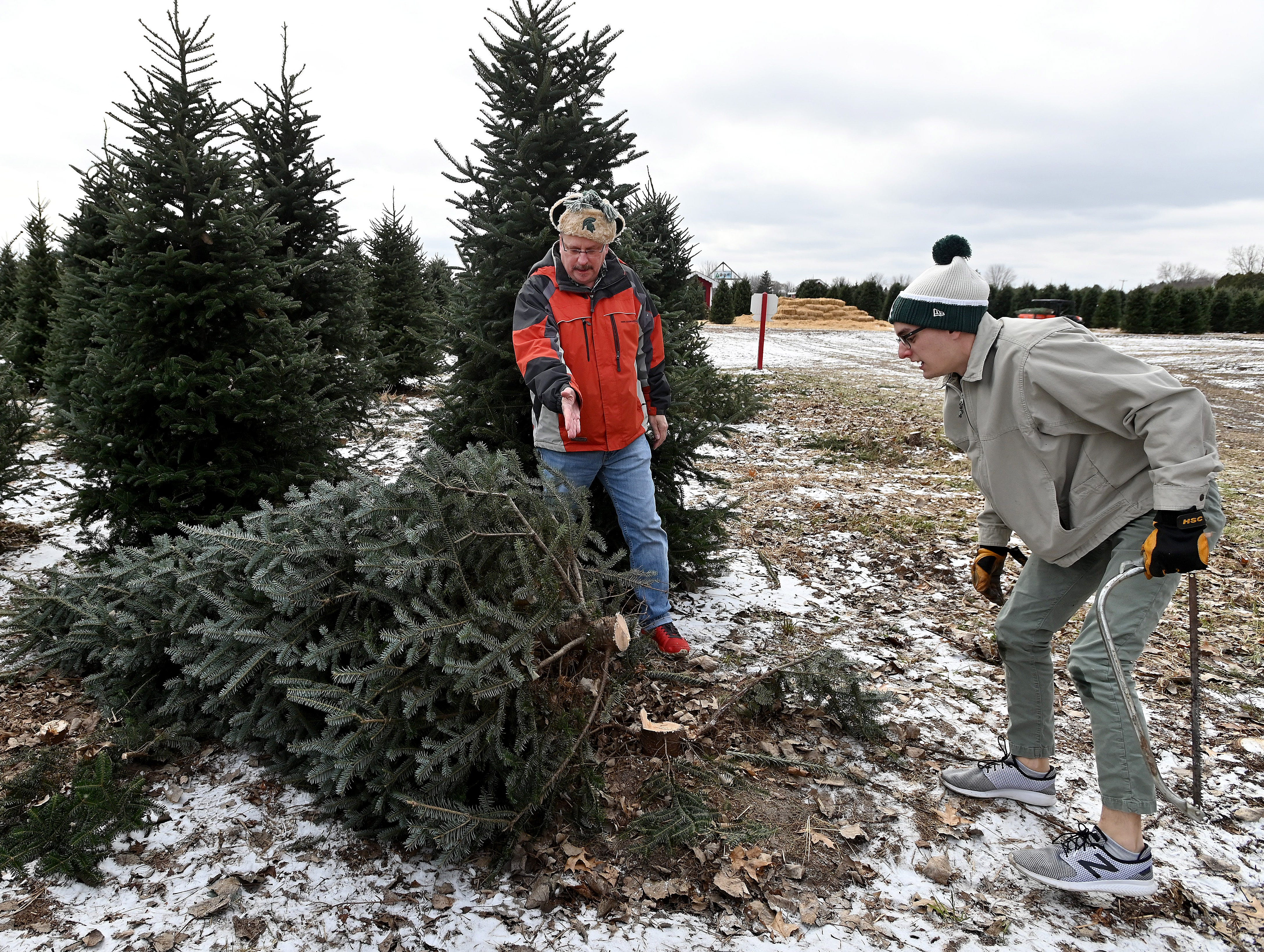 After cutting, Dan Schultz gets a critique of his work from his father, Jim Schultz.  Fortunately for the Bay City family, workers were ready to trim and square-up the base of the freshly cut Fraser fir.