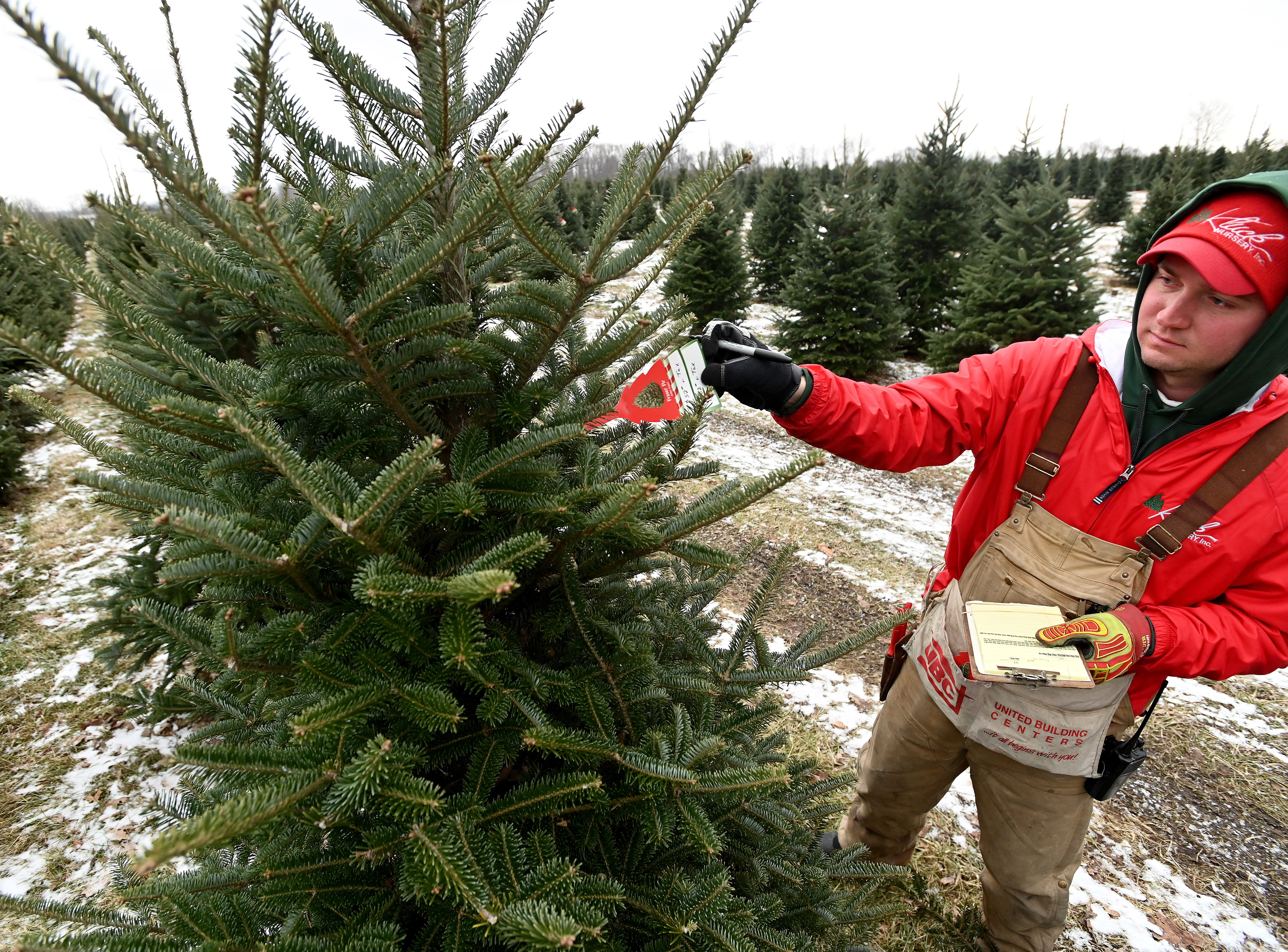Tyler Kluck marks trees with price tags based on the species and height at the Kluck family Christmas tree farm.  Tyler is the fourth generation of Klucks working at the farm/nursery.