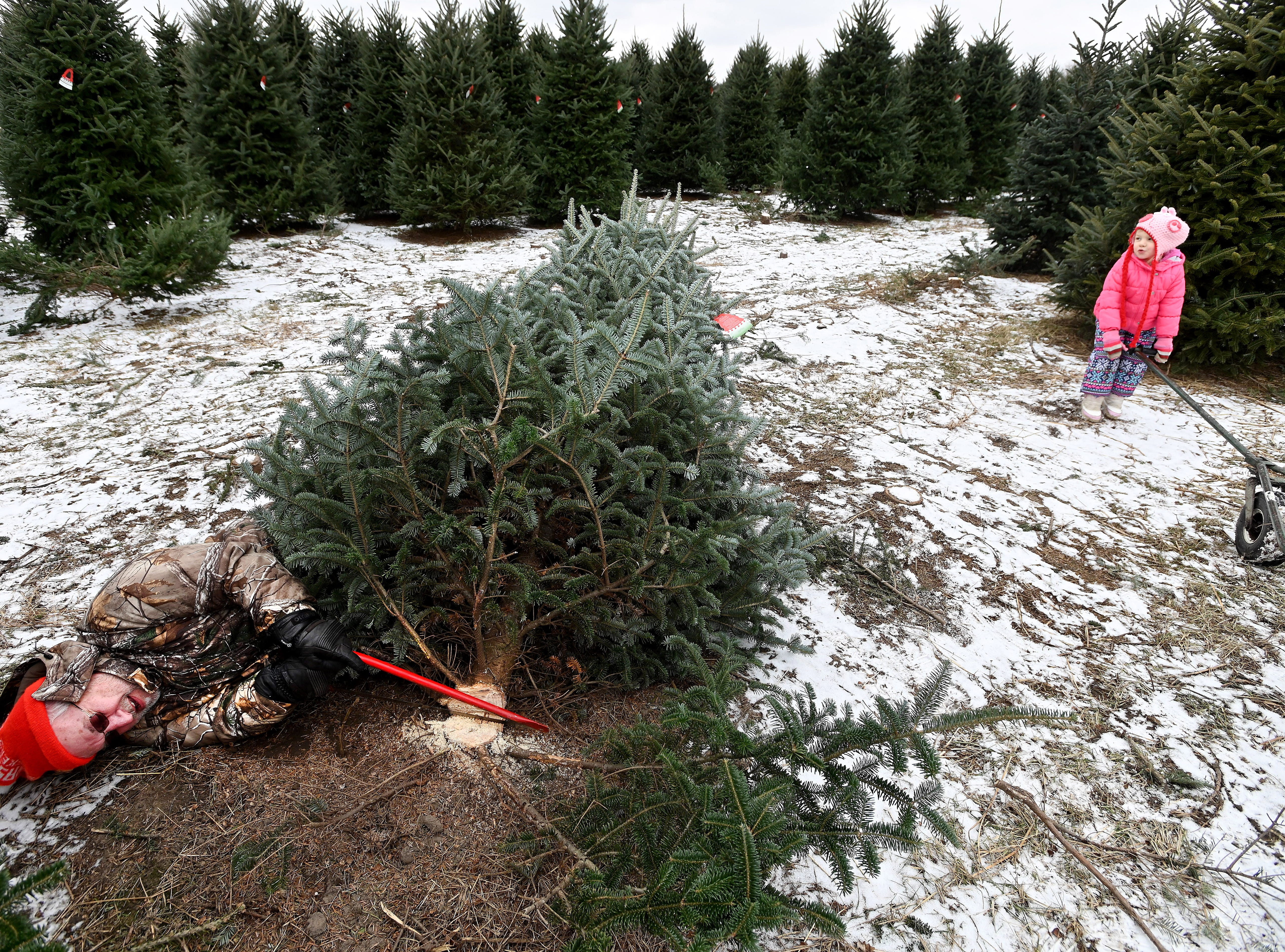 Winded, Bob Schultz lays on the ground and takes a breather after felling the family Christmas tree.