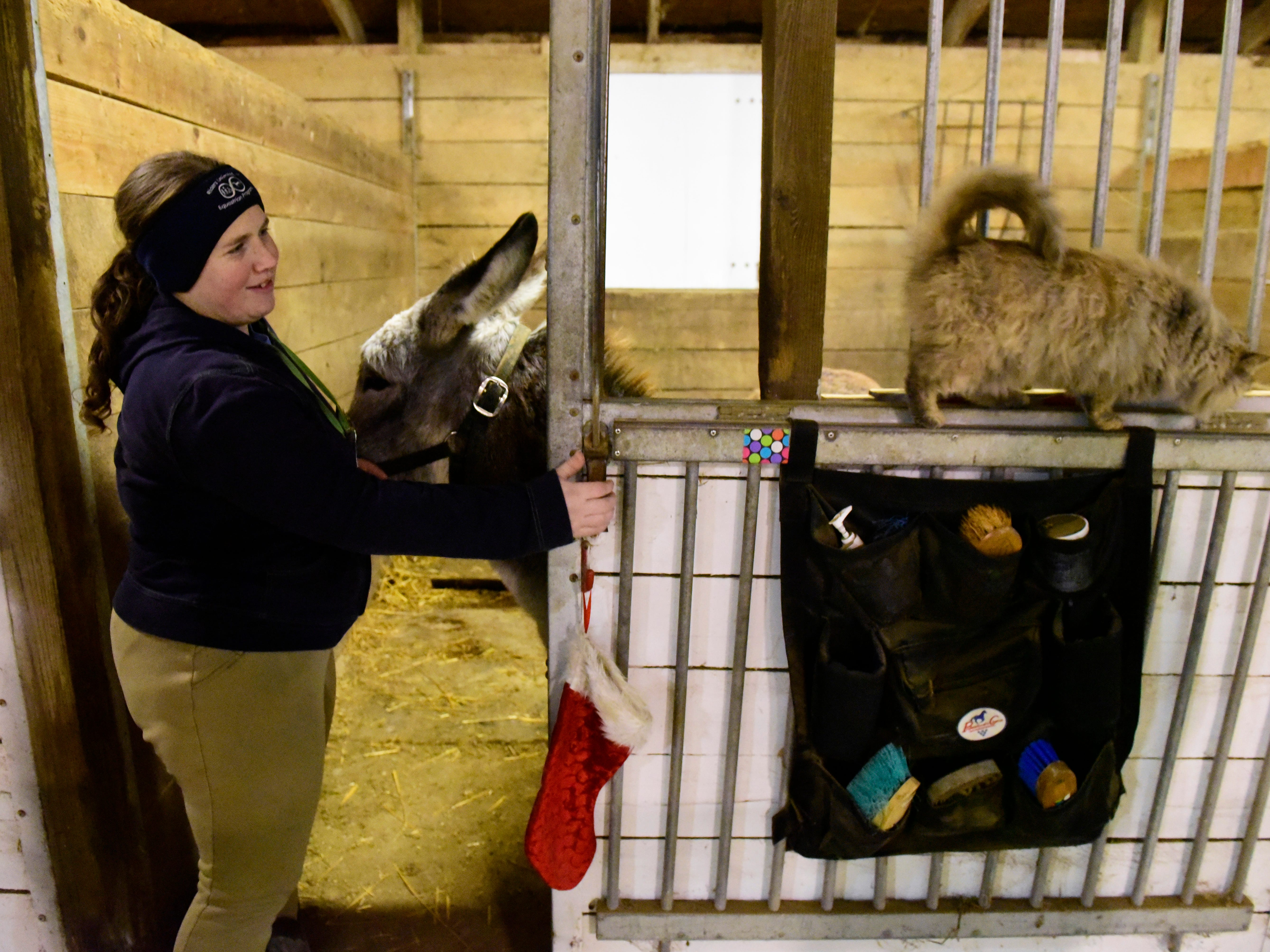 Riding instructor Lindsay Bille cares for Davey the donkey.