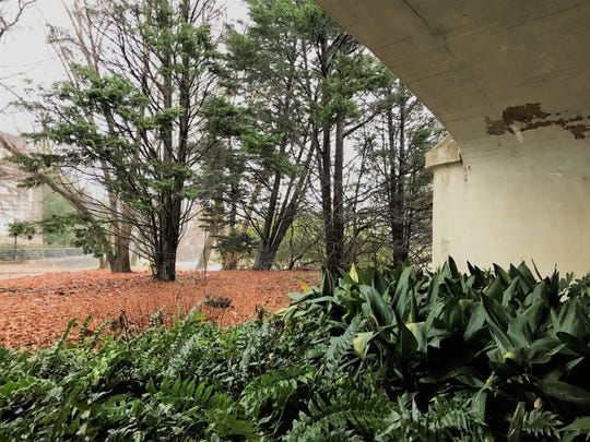 A patch of green space between the Main Street bridge at Reedy River and the old Bowater parking deck, seen here on Friday, Dec. 21, 2018, has been preserved in perpetuity. It will never be developed, says the preservation group Upstate Forever.