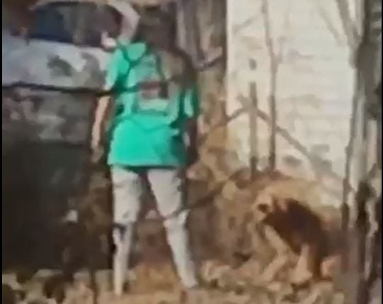 Animal Crush Woman Charged With Animal Cruelty After Video Catches Her Kicking Dog In Weakley County The Jackson Sun Woman Charged With Animal Cruelty After Video Catches Her Kicking Dog