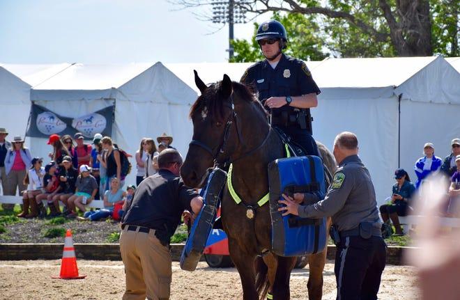 Finley, the Lexington Police Department horse who died Thursday.