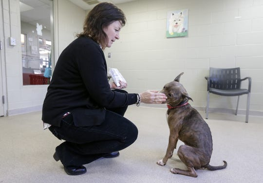 Tina Nichols, Lakeshore Humane Society director, gives Helena a treat Dec. 17 in Manitowoc. The Lakeshore Humane Society will fully rehabilitate Helena before finding her a new home.