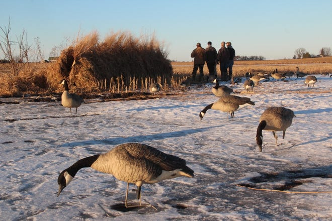 Hunters stand outside their blind and wait for the afternoon's first flights of Canada geese during a Dec. 16, 2018 hunt west of Fond du Lac, Wisconsin.