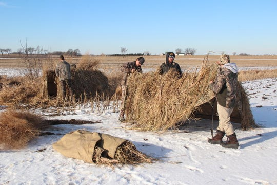 Hunters construct A-frame blinds for a Canada goose hunt near Fond du Lac, Wisconsin.