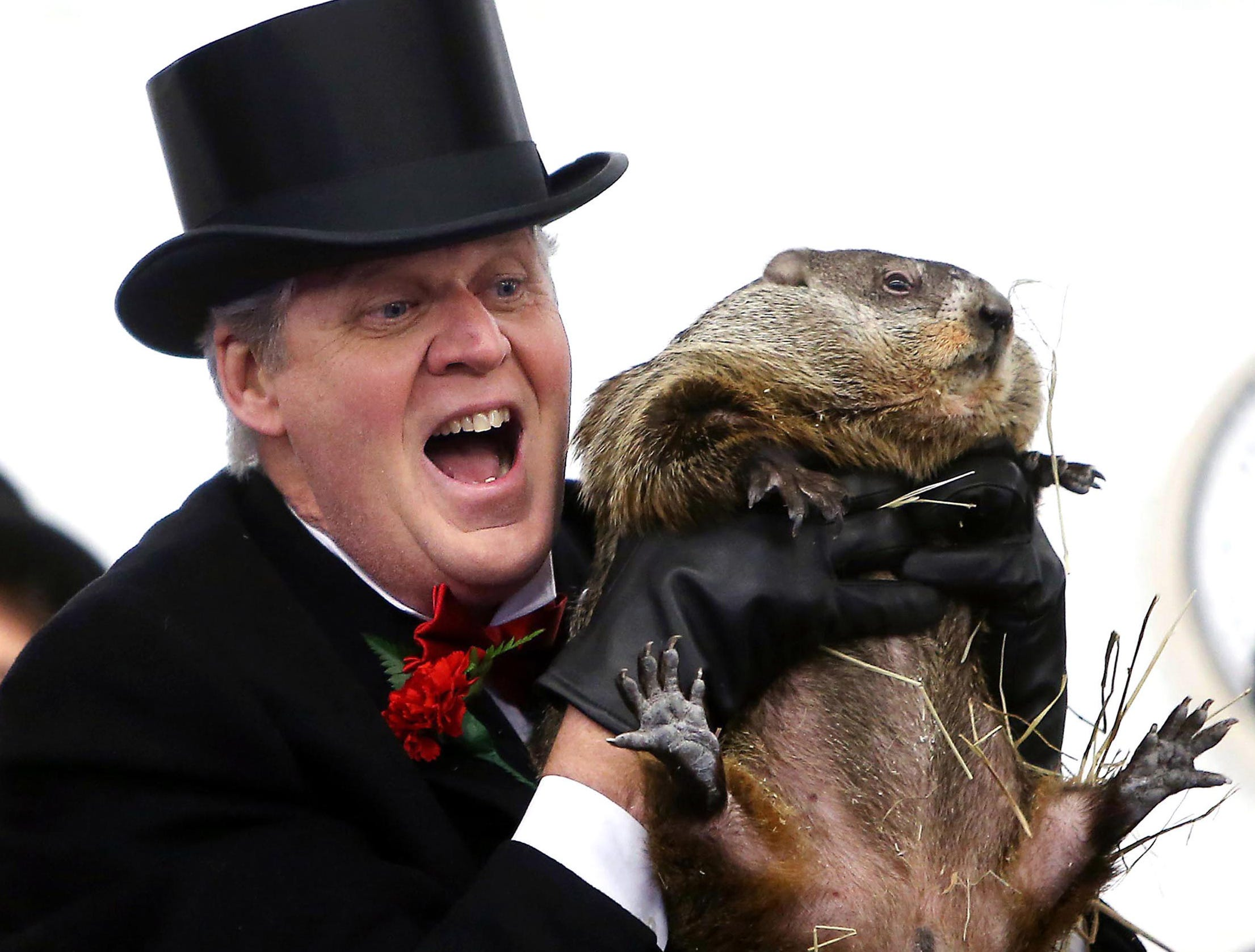 2/3/2017--Head Wrangler Jerry Guthlein holds up his groundhog Milltown Mel on Groundhog Day at the American Legion in Milltown, NJ. Milltown Mel did not see his shadow this morning, according to folklore the spring season will arrive early. The event is in its ninth year.