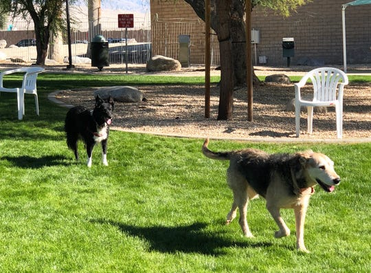 Linda Steen's dogs Daisy and Abby run at the re-opened dog park at Palm Springs City Hall.