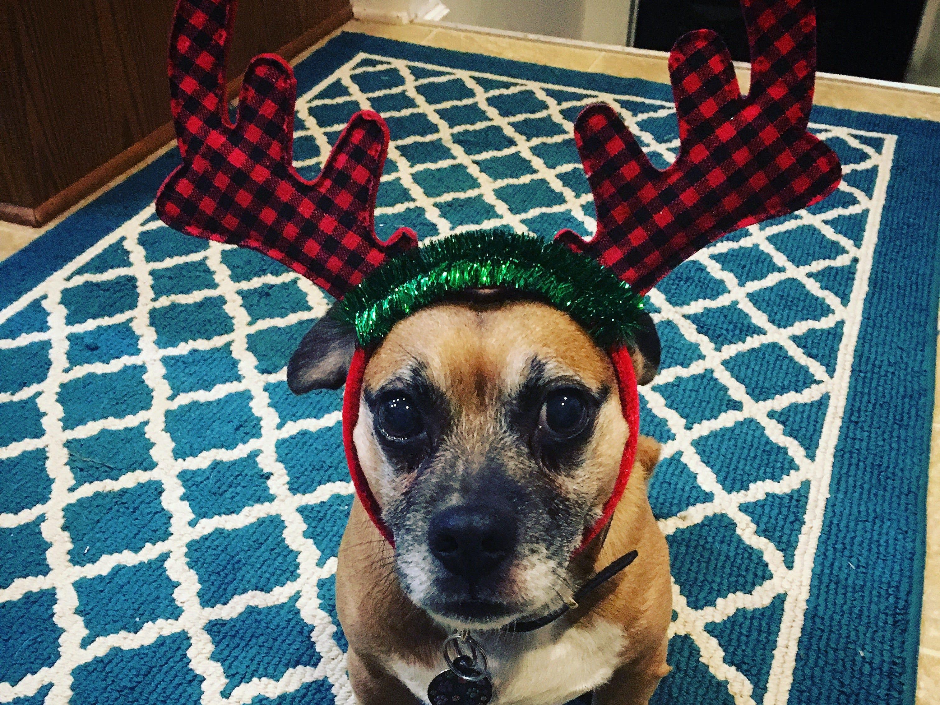 George the reindeer