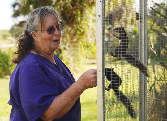 Wildlife rehabilitator Winnie Burns greets a pair of squirrels before she feeds them at Creature Safe Place in western St. Lucie County.